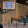 Hip 135 Applauding in foal to Curlin from Hill 'n' Dale on Jan. 13, 2020 Keeneland in Lexington, KY.