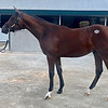 Hip 3835 colt by Liam's Map out of Pelipa from Gainesway at the Keeneland September sale
