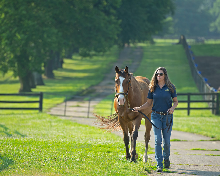 Caption: program coordinator and student advisor Dixie Kendall brings in one of the school horses.<br /> BCTC equine school and NARA in Lexington, Ky., and Thoroughbred Training Center, on July 6, 2020 BCTC in Lexington, KY.