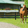 Caption:<br /> British Idiom at WinStar Farm near Versailles, Ky., on June 16, 2020 WinStar Farm in Versailles, KY.