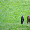 Caption: horses graze in field<br /> Grovendale Farm scenes, near Lexington, Ky.,  on April 15, 2020 Mill Ridge in Lexington, KY.