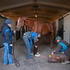 Country House held by Emilee Ingram gets radiographs on the front feet from Scott Morrison DVM (right) and with Shawn Morrell DVM holding radiograph against leg at Blackwood Stables on<br /> Feb. 28, 2020 Blackwood Stables in Versailles, KY.