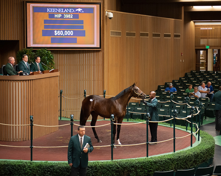 Hip 3982 colt by Palace out of Any For Love<br /> at the Keeneland September sale