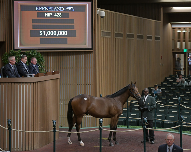 The Curlin colt consigned as Hip 428 at the Keeneland September Sale