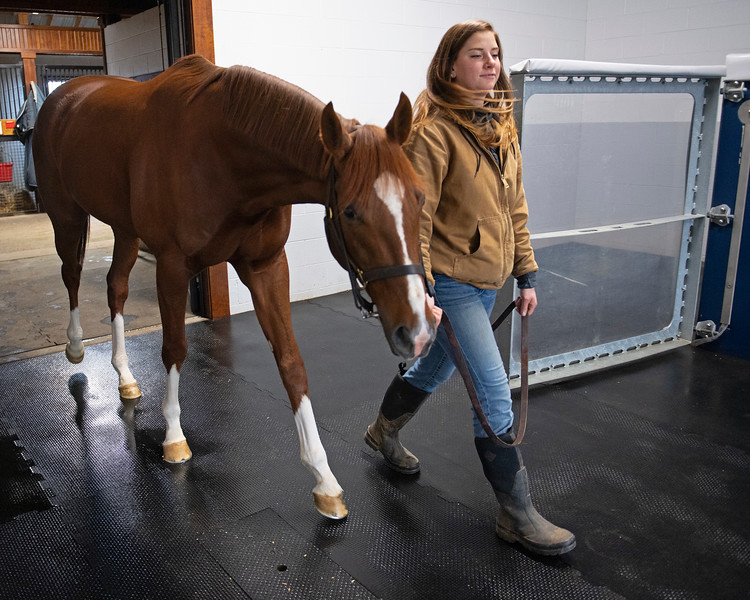 walking to the aqua equine treadmill. Code of Honor at Margaux Farm for some down time before returning to Shug McGaughey and his 4-year-old campaign on<br /> Jan. 23, 2020 Margaux Farm in Midway, KY.