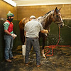 Caption:  Destin has dewpoison medication (small white canister) for the horse Established in the bath stall. <br /> A native of Oklahoma, Heath started working at WinStar Farm on October 10, 2014, and became the farm trainer in October of 2018. Presently he has about 100 horses in training at the WinStar Farm training center, where they have a 7 1/2-furlong main track and 3/4 of a mile undulating turf gallop.<br /> Daily Life series on Destin Heath, farm trainer at WinStar Farm on Aug. 11, 2020 WinStar Farm in Versailles, KY.