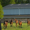 Caption: Yearlings in field<br /> Mares, foals, yearlings, scenes at Ashview Farm near Versailles, Ky., on April 28, 2020 Ashview Farm in Versailles, KY.