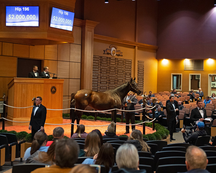 Hip 196 Wonder Gadot from Bluewater<br /> at  Nov. 5, 2019 Fasig-Tipton in Lexington, KY.