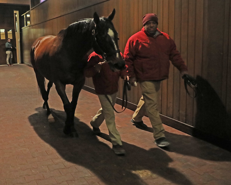 Hip 274H Gloryzapper leaving the ring.