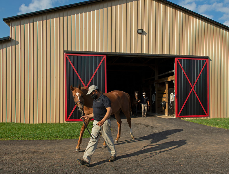 Caption:  Jose Varela with colt by Candy Ride out of Beckles Road, followed by Justo Martinez with colt by Ghostzapper out of Abatis.<br /> Aidan and Leah O'Meara at Stonehaven Steadings near Versailles, Ky. on Aug. 7, 2020