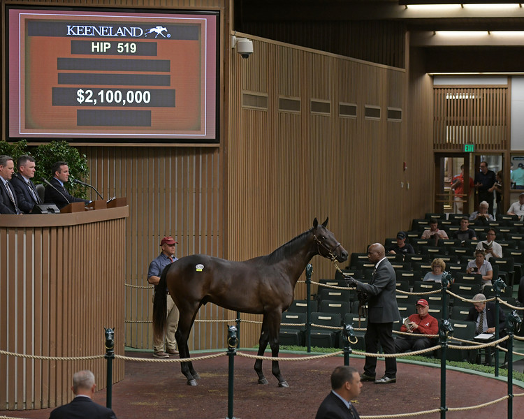 The Pioneerof the Nile colt consigned as Hip 519 in the ring at the Keeneland September Sale