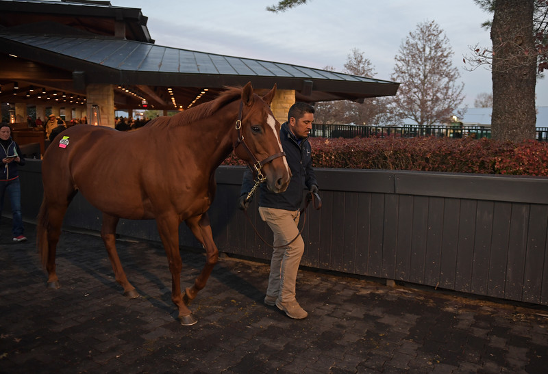 Hip 3552 Inflamed on  Nov. 14, 2019 Keeneland in Lexington, KY.