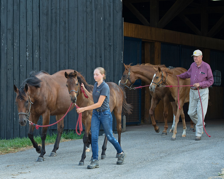 Caption: (L-R): Shane's Girlfriend and her 2020 Arrogate colt and Bellezza Rosso and her 2020 Goldencents filly are lead from the barn to their field. <br /> Chuck and Lyra Miller at Rosecrest Farm near Paris, Ky. on July 10, 2020 Rosecrest in Paris, KY.