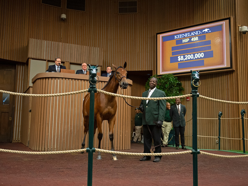 The American Pharoah filly consigned as Hip 498 at the Keeneland September Sale