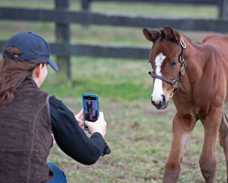Claire Crosby takes a video. The first foal, a filly by Justify from the mare Foreign Affair, was born on Jan. 3, 2020, at Amaroo Farm for owners Audley Farm on Jan. 11, 2020 Amaroo Farm in Lexington, KY.