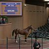 The Dialed In colt consigned as Hip 2792<br /> at Keeneland September sale.