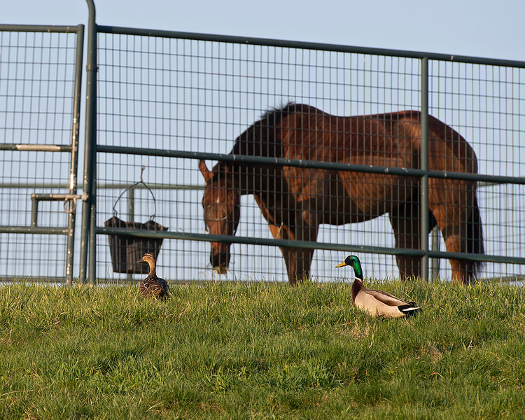 Morning scenes at Keeneland in Lexington, Ky., on April 3, 2019. scene, fowl and horse