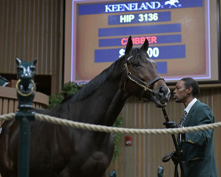 HIp 3136 Annals of Time<br /> on  Nov. 19, 2019 Keeneland in Lexington, KY.