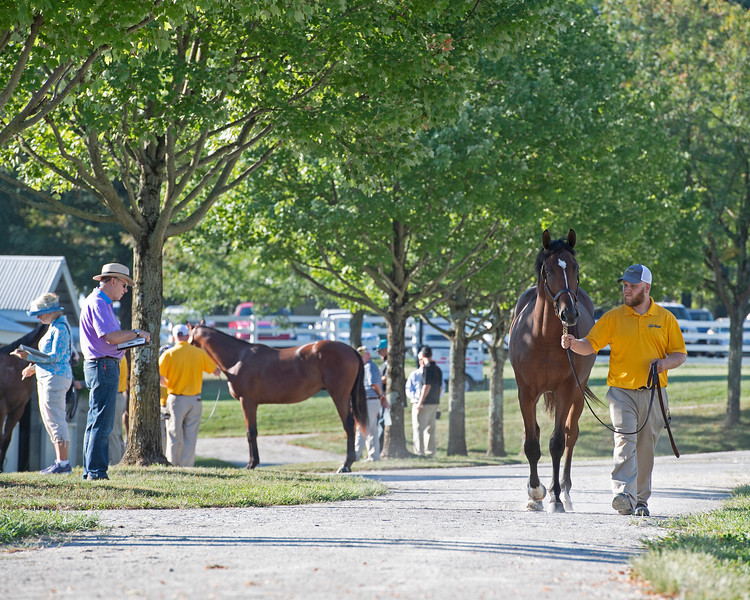 Prospective buyers looking over yearlings at Claiborne consignment<br /> at the Keeneland September Sale.