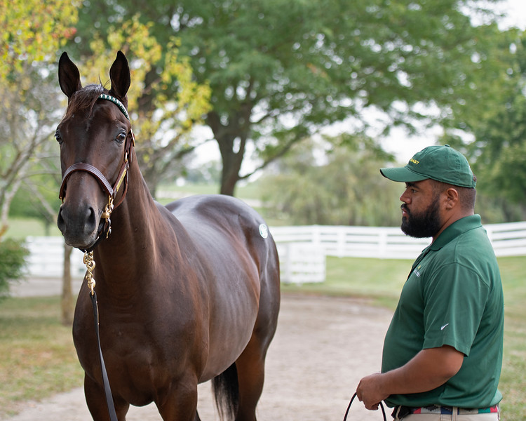 Hip 375 colt named Bluenote by Dubawi out of Eblouissante from the Lane's End consignment<br /> at the Keeneland September Sale.