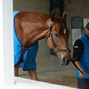 Caption: cooling out in the shedrow<br /> Keeneland scenes and horses on April 25, 2020 Keeneland in Lexington, KY.