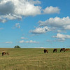 Caption: mares and foals in field<br /> Chuck and Lyra Miller at Rosecrest Farm near Paris, Ky. on July 10, 2020 Rosecrest in Paris, KY.