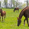 Caption: Filly born 2/17/20 by Uncle Mo from the mare Yesshewill  <br /> Rob Tillyer and Dixiana Farm scenes near Lexington, Ky.,  on April 18, 2020 Dixiana in Lexington, KY.