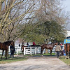 sales horses and horses in training scene<br /> Morning sales and racing scenes at Keeneland in Lexington, Ky., on April 4, 2019
