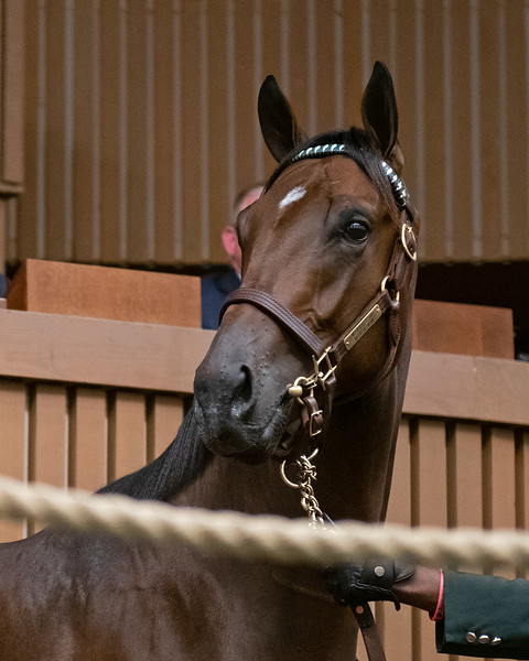 The Medaglia d'Oro colt consigned as Hip 185 in the ring at the Keeneland September Sale