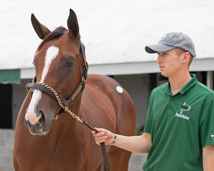 The Tonalist colt consigned as Hip 80 at Penn Sales' consignment to the Keeneland September Sale.
