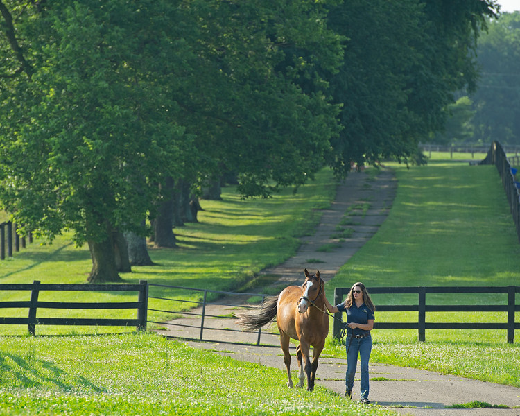 Caption:  Program coordinator and studen adviser Dixie Kendall brings in one of the student horses.<br /> BCTC equine school and NARA in Lexington, Ky., and Thoroughbred Training Center, on July 6, 2020 BCTC in Lexington, KY.