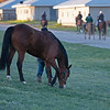 Caption: Grazing as other horses go to track for training<br /> Behind the Scenes at Keeneland during Covid19 virus and the people, horses, and essentials needed to take care of race horses on April 2, 2020 Keeneland in Lexington, KY.
