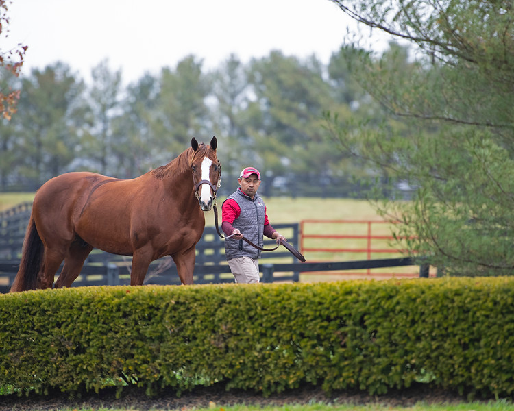 California Chrome at Taylor Made on Nov. 22, 2019 Taylor Made in Nicholasville, KY.