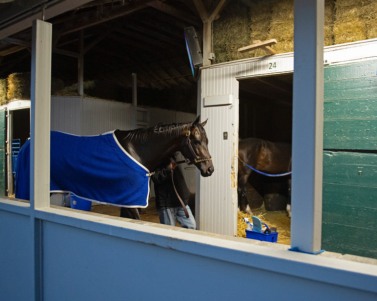 Caption: walking shedrow after bath<br /> Midnight Bisou at Keeneland on May 2, 2020 Keeneland in Lexington, KY.