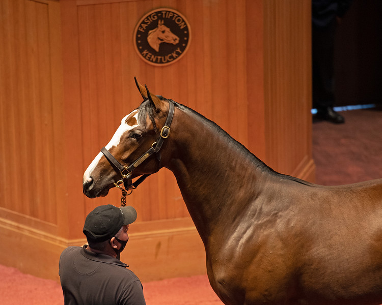 Hip 338 filly by Constitution out of Samsational from Blake-Albina<br /> Fasig-Tipton Selected Yearlings Showcase in Lexington, KY on September 10, 2020.