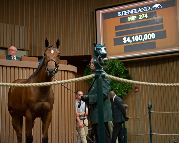 The Curlin colt consigned as Hip 274 in the ring at the Keeneland September Sale