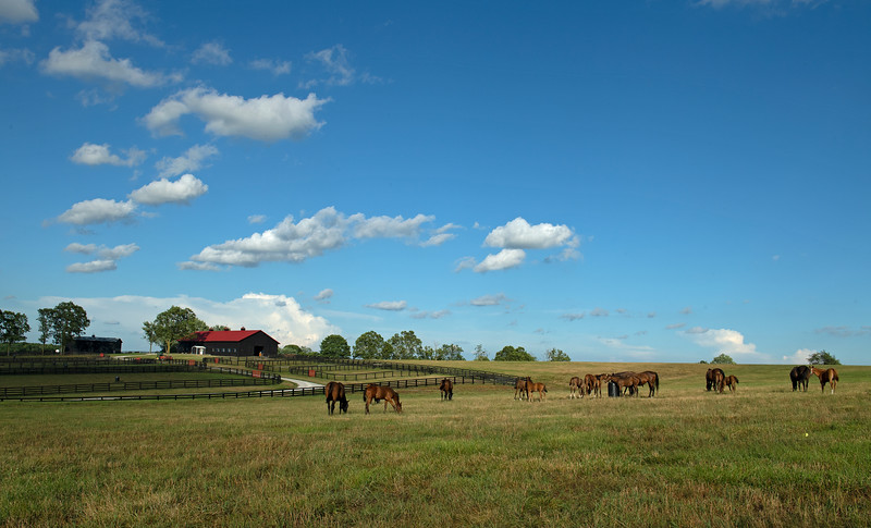 Caption: mares and foals in a field<br /> Chuck and Lyra Miller at Rosecrest Farm near Paris, Ky. on July 10, 2020 Rosecrest in Paris, KY.