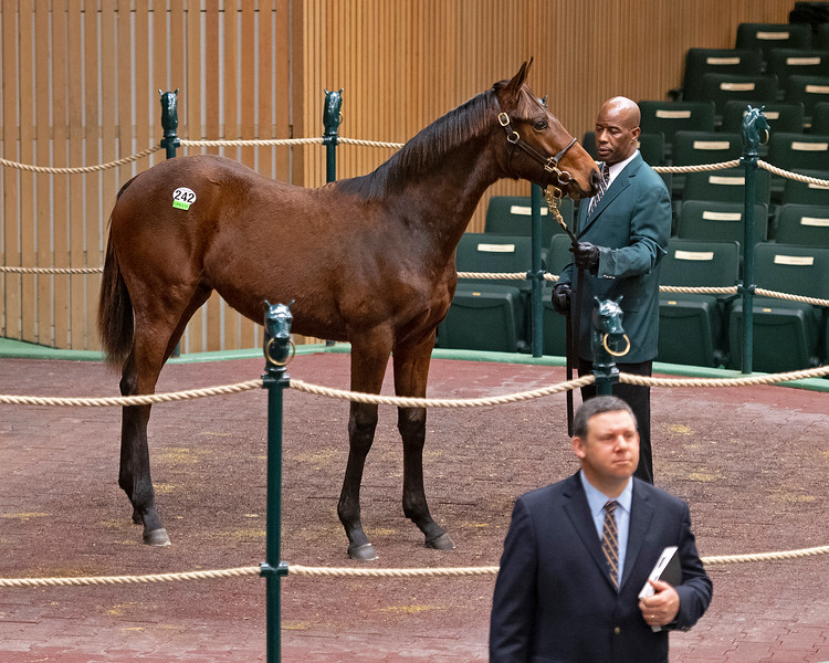 Hip 242 colt by Quality Road from Foxysox and Denali Stud and bought by Tami Bobo Jan. 13, 2020 Keeneland in Lexington, KY.