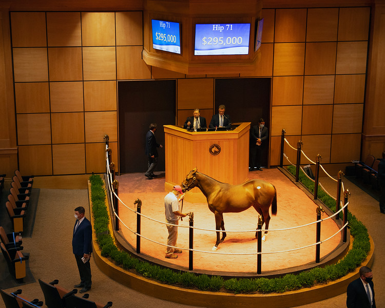 Hip 71 colt by Candy Ride out of Sweet Love from Eaton Sales.<br /> Fasig-Tipton Selected Yearlings Showcase in Lexington, KY on September 9, 2020.