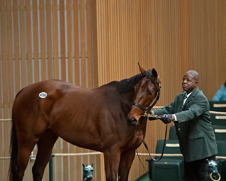 Hip 496 Tiz Breathtaking from Eaton.<br /> Keeneland January Horses of all ages sales on<br /> Jan. 14, 2020 Keeneland in Lexington, KY.