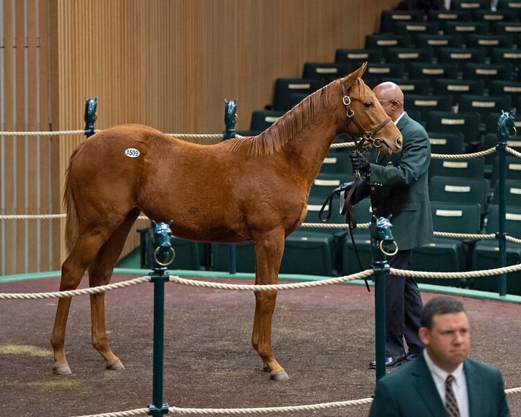 Hip 1509 filly by Mastery from Jungle Tale<br /> on  Nov. 9, 2019 Keeneland in Lexington, KY.