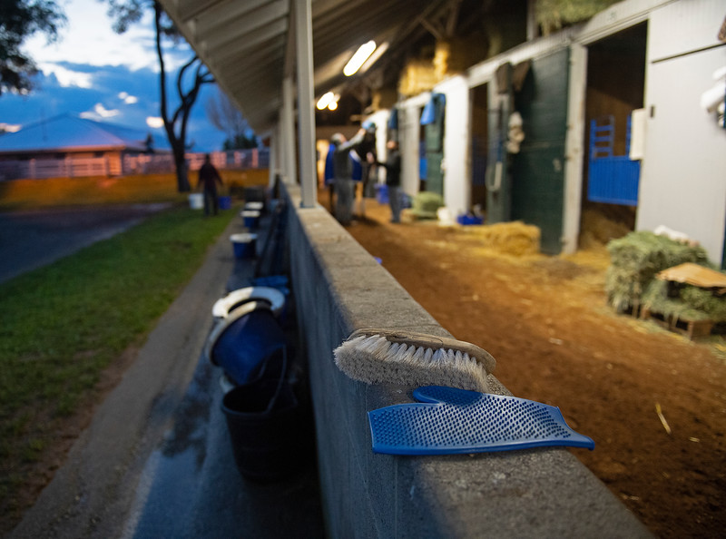 Caption: grroming tools foreground as Midnight Bisou gets groomed in background<br /> Midnight Bisou at Keeneland on May 2, 2020 Keeneland in Lexington, KY.