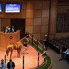 Hip 480 colt by Violence out of Antics from Gainesway<br /> Fasig-Tipton Selected Yearlings Showcase in Lexington, KY on September 10, 2020.