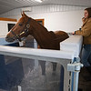 walking on aqua equine treadmill as water starts to fill up to 18 inches in the chamber. Code of Honor at Margaux Farm for some down time before returning to Shug McGaughey and his 4-year-old campaign on<br /> Jan. 23, 2020 Margaux Farm in Midway, KY.