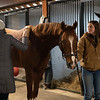 getting brushed off before going in the aqua equine treadmiil. Code of Honor at Margaux Farm for some down time before returning to Shug McGaughey and his 4-year-old campaign on<br /> Jan. 23, 2020 Margaux Farm in Midway, KY.