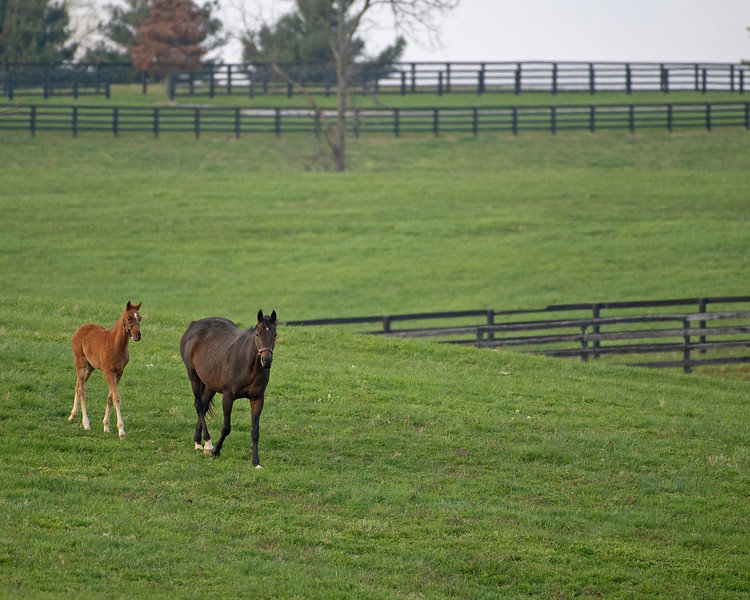 Caption: mare and foal in a field, Intensify and her colt by Gun Runner<br /> Mill Ridge Farm scenes, near Lexington, Ky.,  on April 15, 2020 Mill Ridge in Lexington, KY.