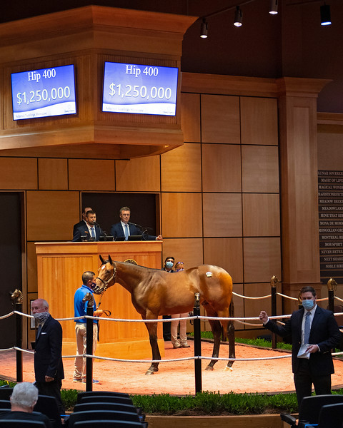 Hip 400 colt by American Pharaoh out of Swingit from Denali<br /> Fasig-Tipton Selected Yearlings Showcase in Lexington, KY on September 10, 2020.