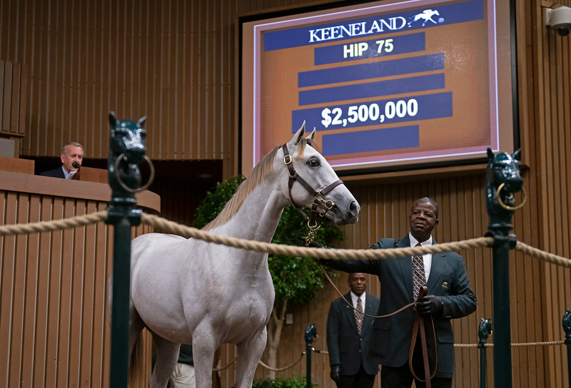 The Tapit colt consigned as 75 in the ring at<br /> at the Keeneland September Sale.