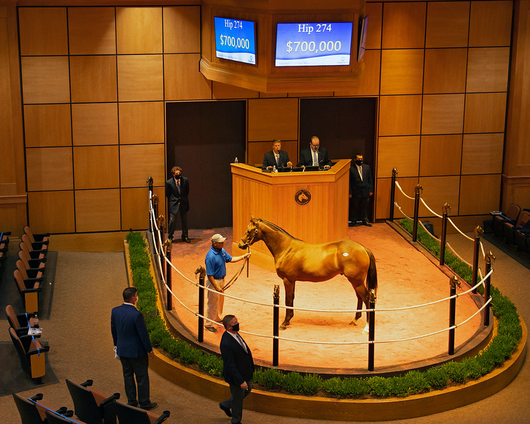 Hip 274 colt by Into Mischief out of Night and Day from Denali Stud<br /> Fasig-Tipton Selected Yearlings Showcase in Lexington, KY on September 9, 2020.