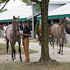 (L-R): The American Pharoah filly consigned as Hip 127 and the Tapit filly consigned as Hip 372 at Gainesway's consignment to the Keeneland September Sale.<br /> at the Keeneland September Sale.